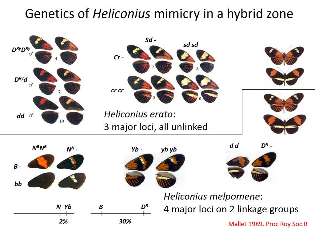 Hybrid Genetics Related Keywords - Hybrid Genetics Long ...